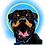 Thumbnail: Pet Portrait