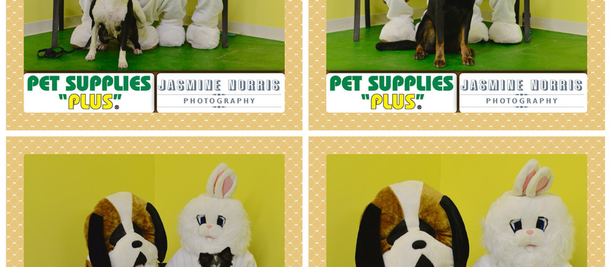 Pet Supplies Plus Easter Pet Portraits-Event