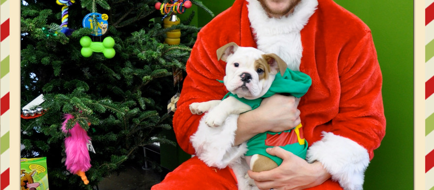 Pet Supplies Plus Holiday Pet Portraits: Crown Point, Indiana