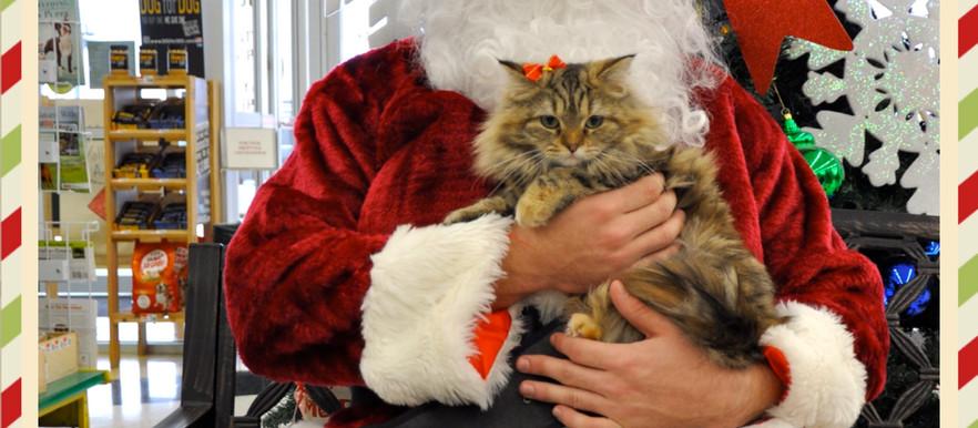 Pet Supplies Plus: Holiday Pet Portraits Event