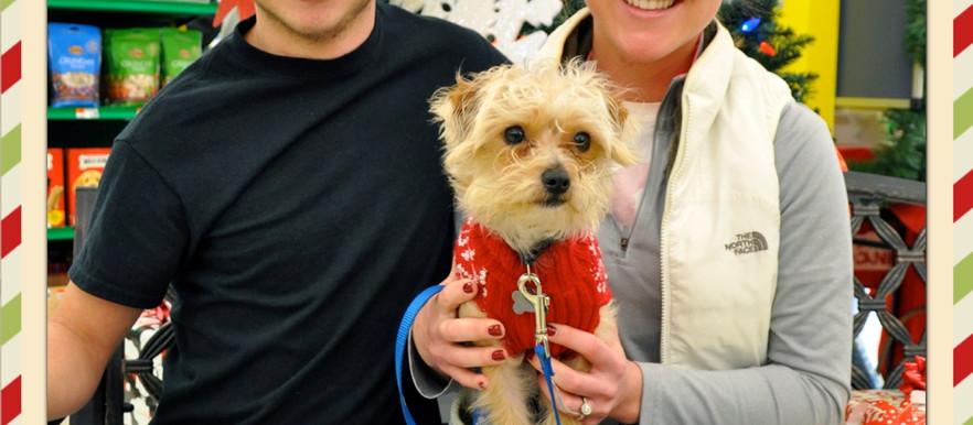 Pet Supplies Plus Holiday Pet Portraits: Lafayette Event