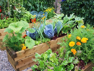 Health Tips for Planning your Fall Garden..