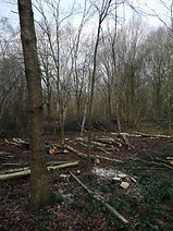 Woodland Site Clearance Suffolk