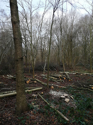 Site Clearance Commercial Domestic Tree Stump Suffolk