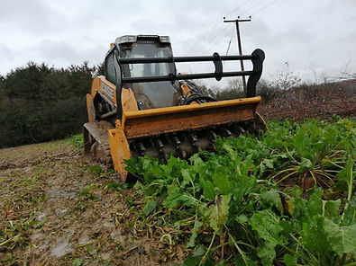 Forestry mulching trees, shrubs, vegetation and forest in Suffolk