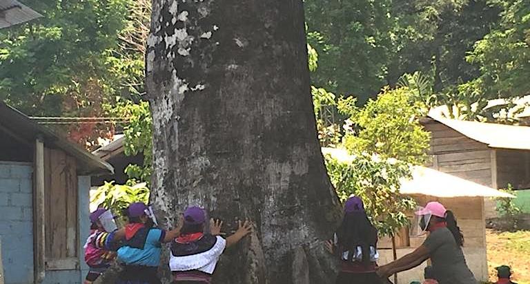 EZLN: Que cuiden esa semilla, la planten, y la hagan crecer