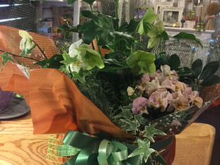 ミニ観葉植物とクリスマスローズの寄せ植え籠