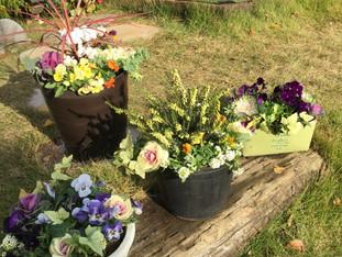 草花やグリーンの寄せ植え承ります。