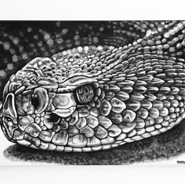 ALBINO RATTLER, 2017  black & white Acrylic on Canvas  Ca 90 x 120 cm signed