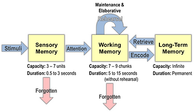 info processing model b.png
