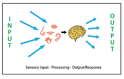 sensoryprocessingdiagram.png