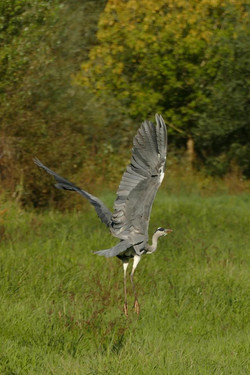 Oiseaux (19)