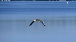 Oiseaux (11)