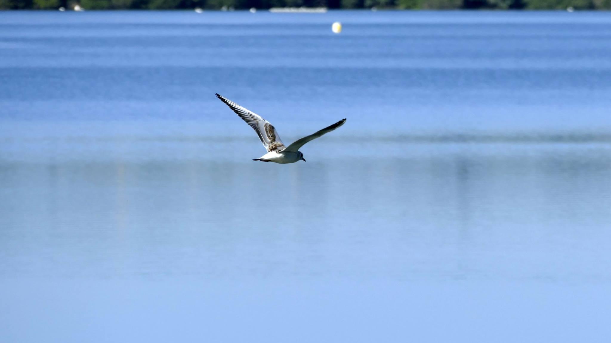 Oiseaux (9)