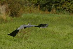 Oiseaux (18)