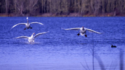 Oiseaux (5)