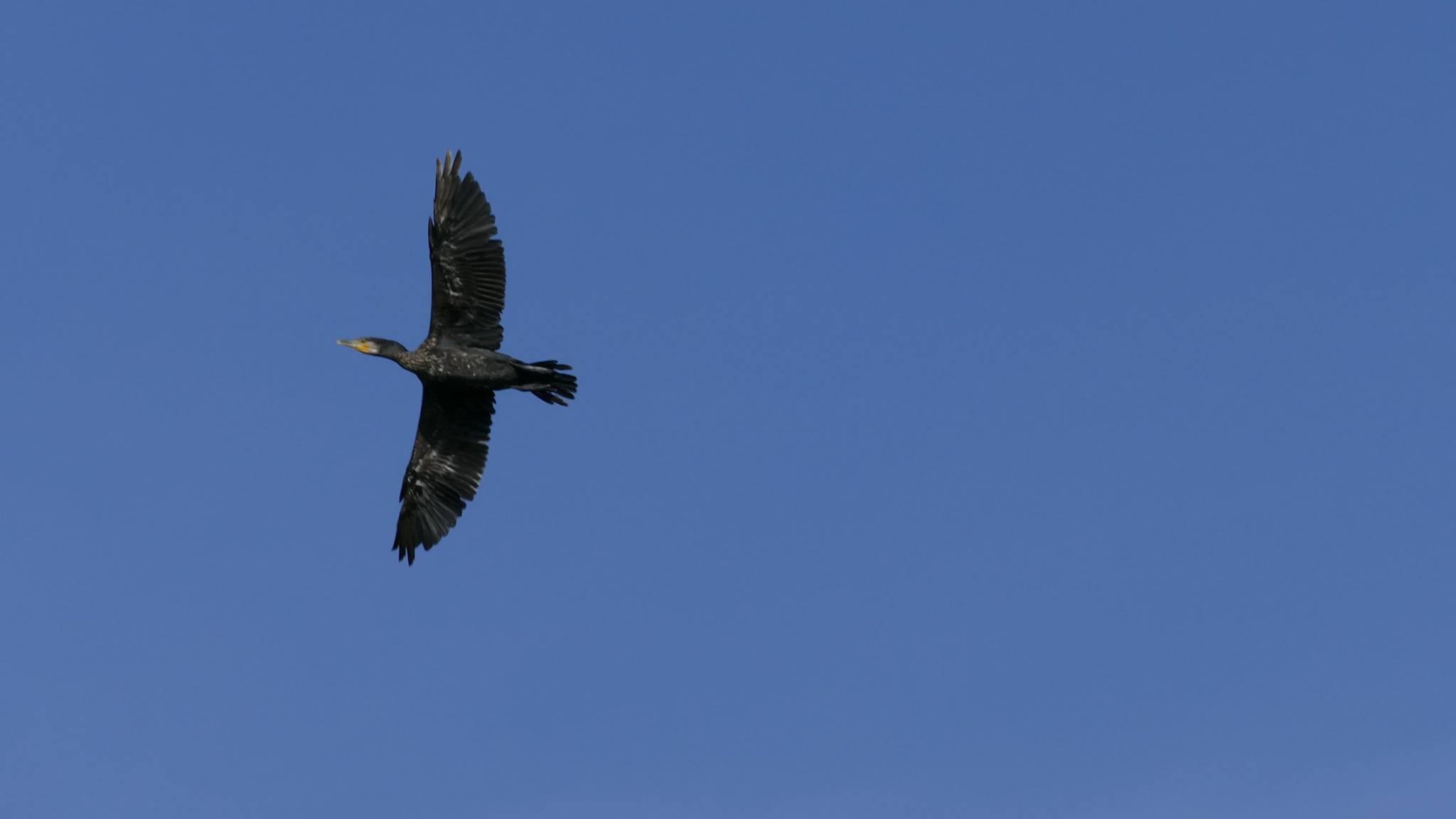 Oiseaux (12)
