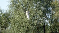 Oiseaux (8)