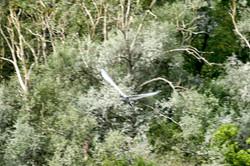 Oiseaux (13)