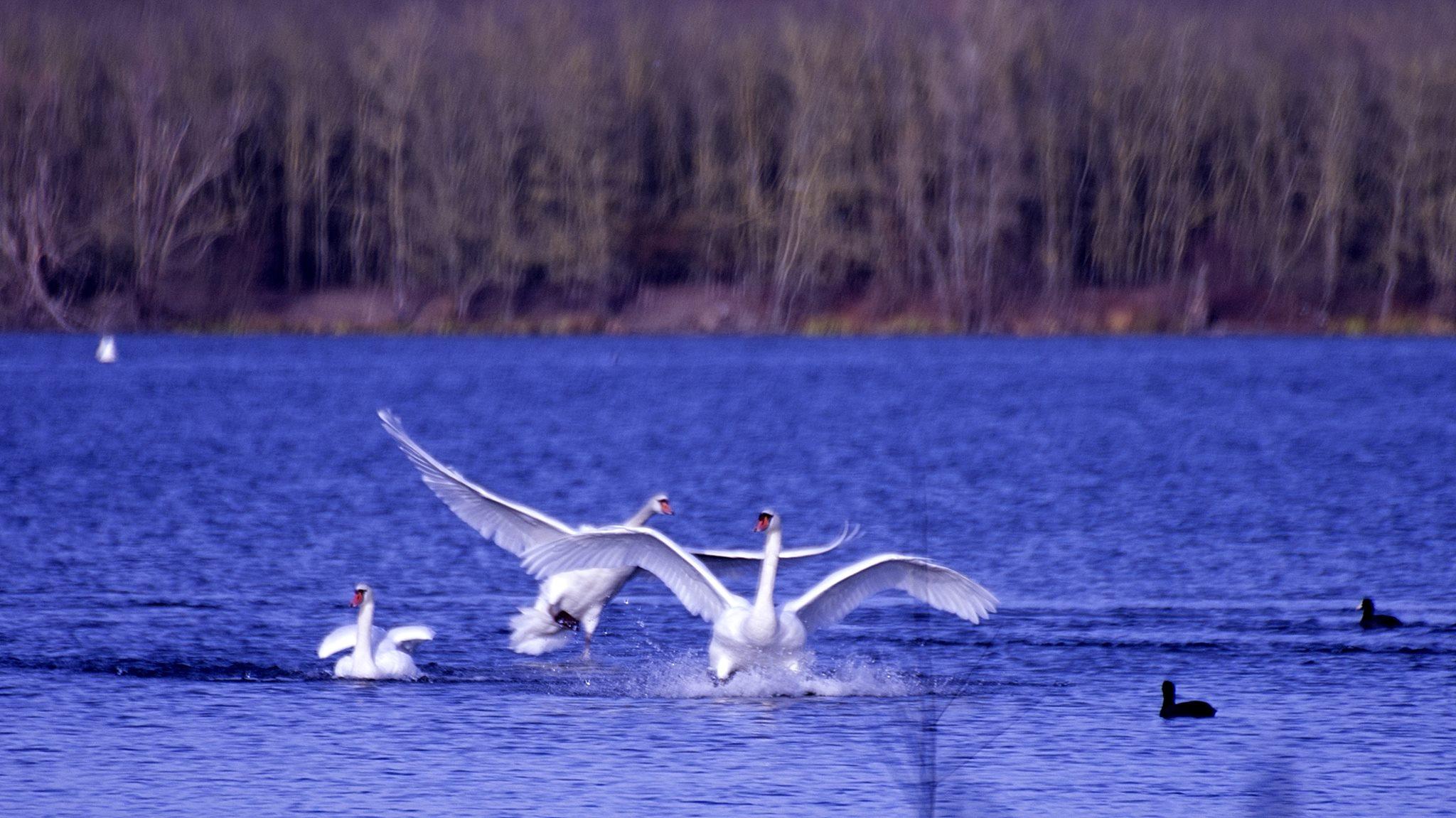 Oiseaux (6)