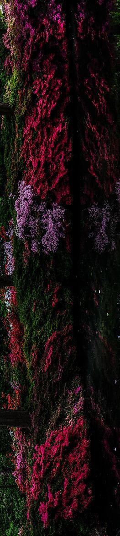 Flower Root II.jpg