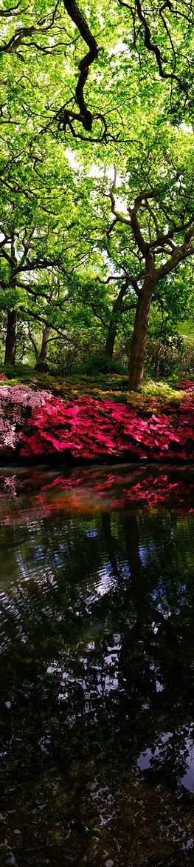 Flower Root III.jpg