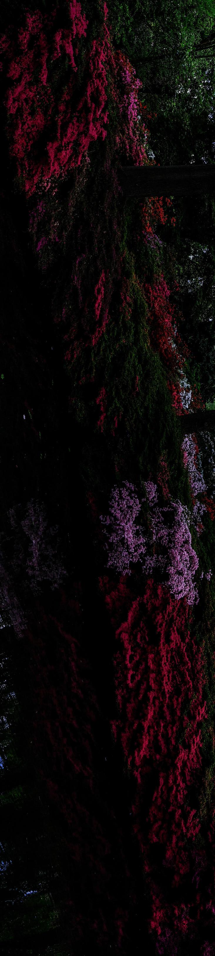 Flower Root I.jpg