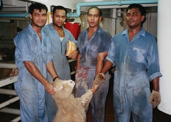 Live-Animal-Export-Sheep-770x547.jpg