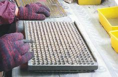 Raw Material control - Tiroflx.jpg