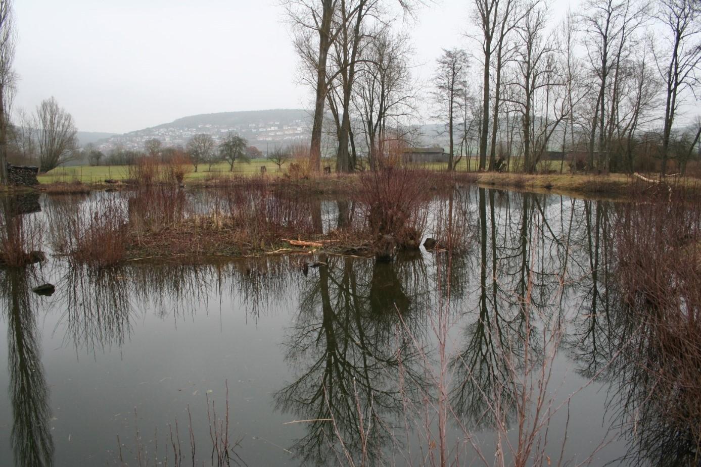 Feuchtgebiet Horb