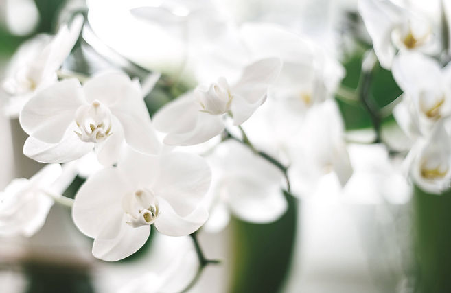 lisa_leberbauer_orchidee (1).jpg