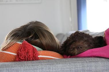Spanischer Wasserhund Welpe im neuen Zuhause