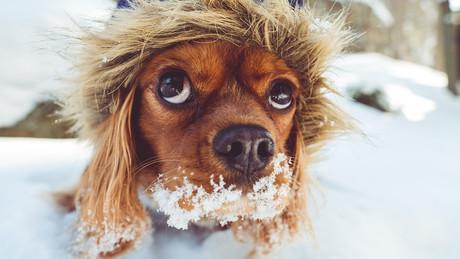 Partir à la neige avec son chien
