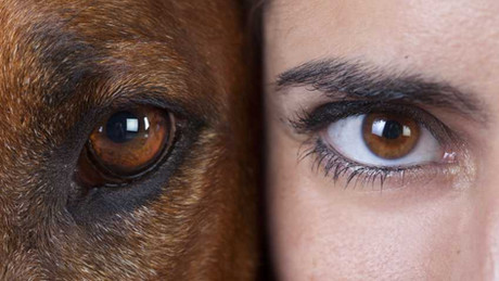 Comment voient les chiens et chats ?