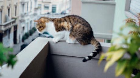 Ouverture des fenêtres et des portes-fenêtres durant le printemps : attention à vos chats