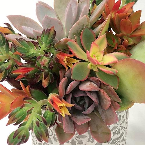 Designer's Choice - Succulent