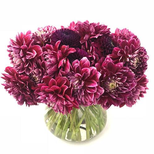Raspberry Dahlias