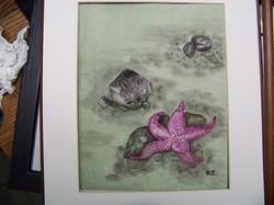 Barbara's Starfish