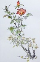2014 ROSE GARDEN 050614 Louise 3.JPG
