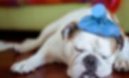headache dog.png