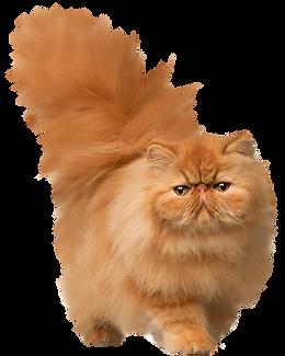 cat_PNG50548.png