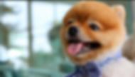 Todd dog.png