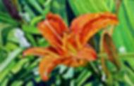 Summer Lily by Brynn Carroll