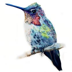 Hummingbird NO.2