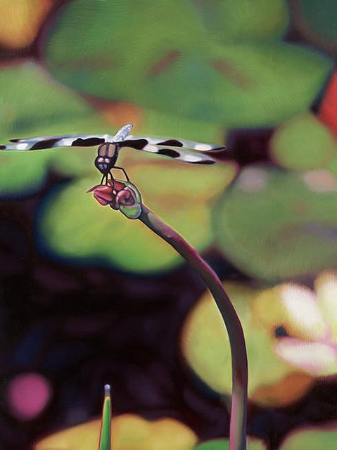 DRAGONFLY -  Limited Edition Canvas Print