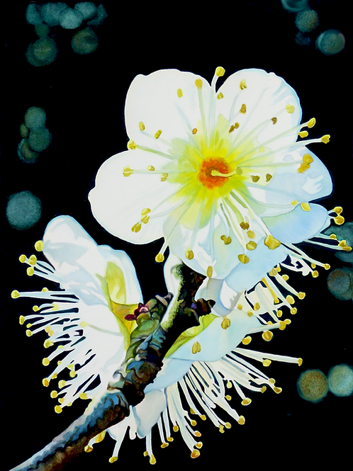 White Flower   Original Painting