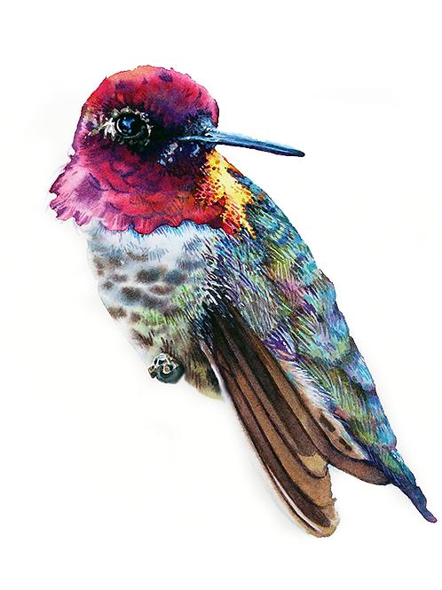 HUMMINGBIRD STUDY NO.3