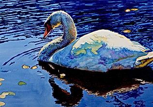 Sunlight Swim - Swan swimming in water