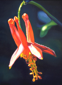 Flower Study NO.3