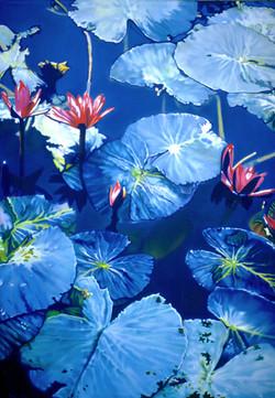 Waterlilies NO.3